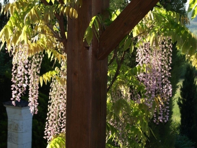 nougayrede-bas-pink-wisteria
