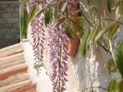 nougayrede-bas-wisteria